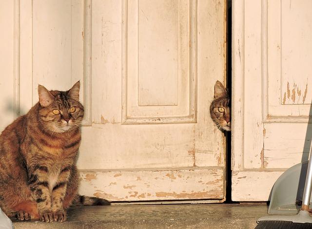 Cat Friendly Apartment Living