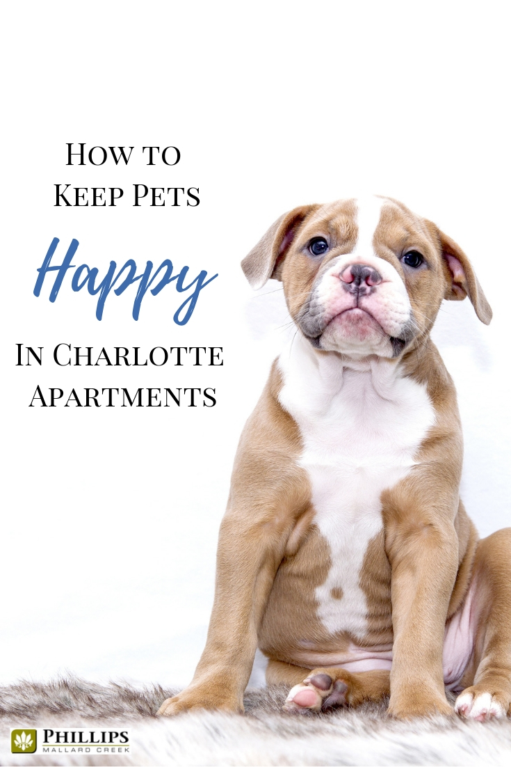 How to Keep Pets Happy in Charlotte Apartments | Phillips Mallard Creek