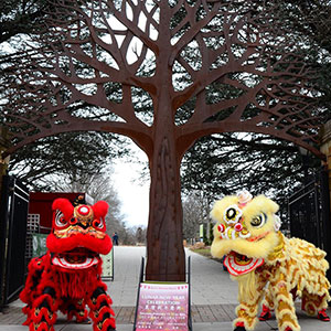 Lunar New Years at Queens Botanical Garden