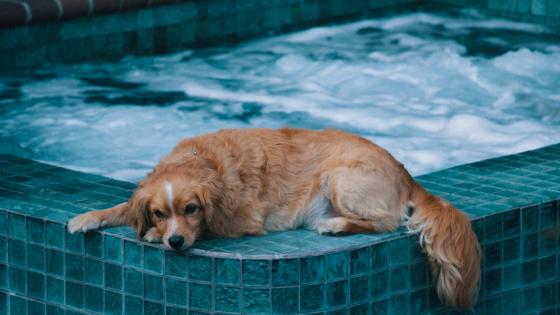 dog hot tub