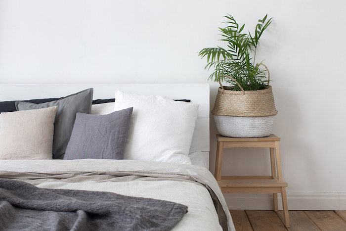 Indoor Plant Tips