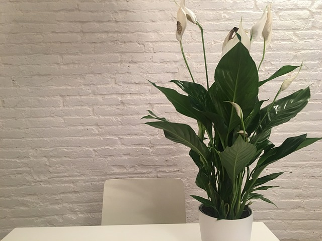 Beautiful Green Plant on Desk in an Apartment
