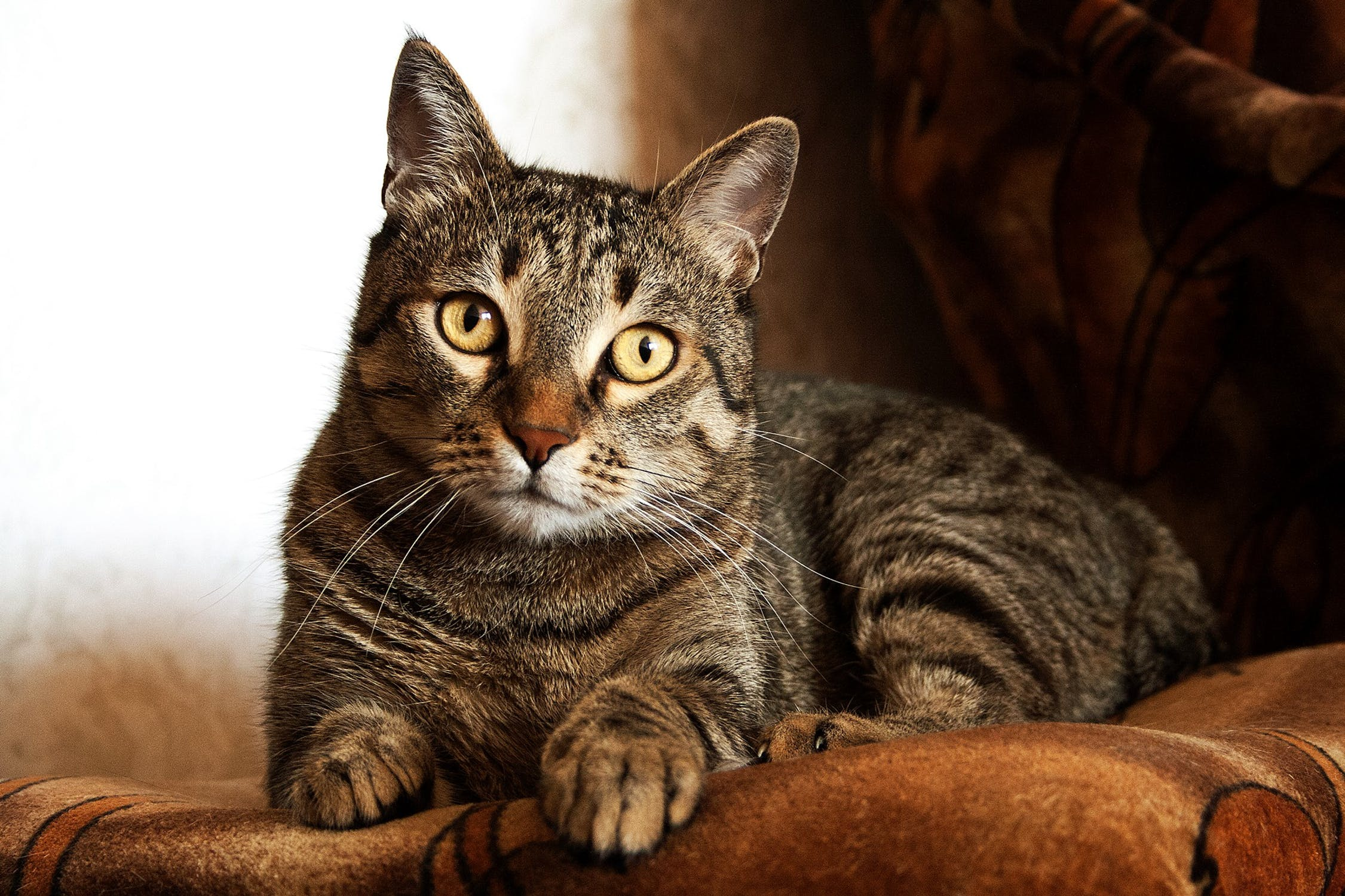 3 easy homemade cat food recipes have the recent cat food recalls made you anxious about feeding your beloved feline store bought meals if so it may be time to whip up your own homemade forumfinder Images