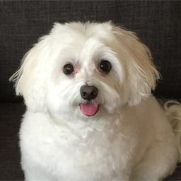Meet Gigi