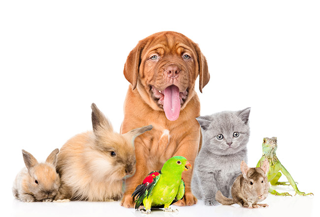 Stevenson Lane Apartments is a pet friendly community in Towson.