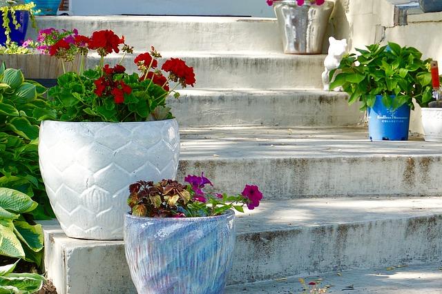 Pretty Flowers on Steps