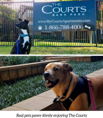 Pet Friendly Apartments at The Courts