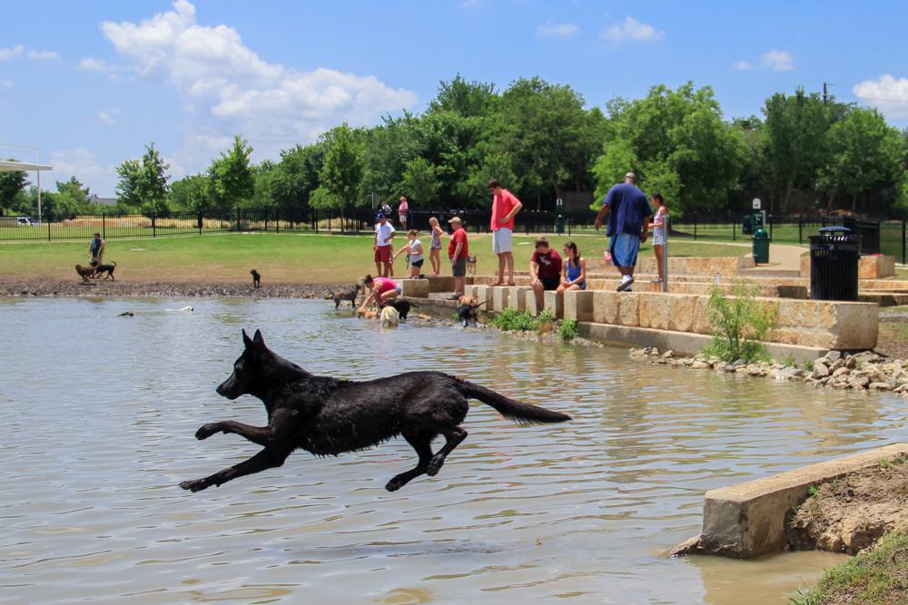 dallas dog park