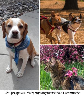 Pet Friendly Apartments at Park Trace