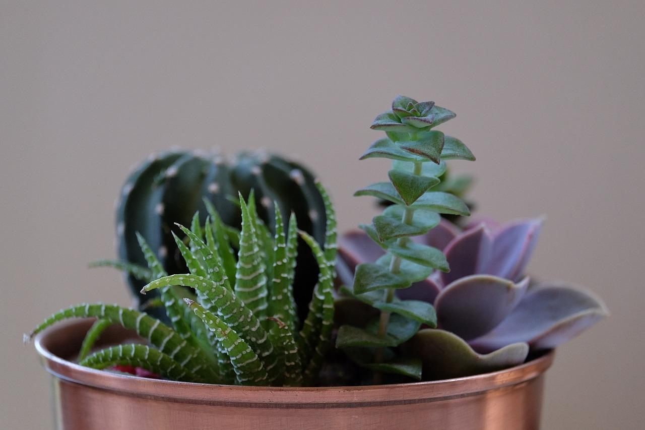 Succulent Plants For Apartment