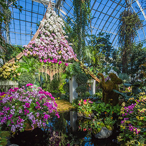The New York Botanical Garden's Orchid Show