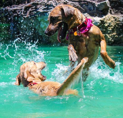 The Metropolitan Apartments Nashville, TN West Nashville Pet Friendly community pet policy